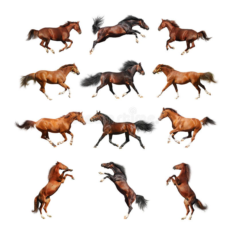 Horse collection - isolated on white stock photography