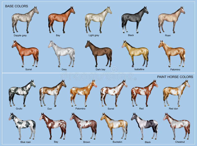 Horse color chart. Chart of the 22 main horse coat colors stock illustration