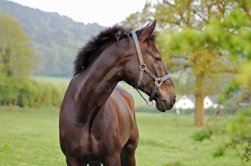 Download Horse In The Country 3 stock photo. Image of head, saddle - 754644