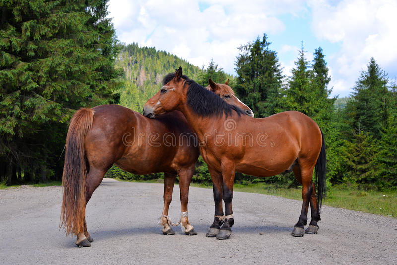 Horse couple standing on the road royalty free stock photo