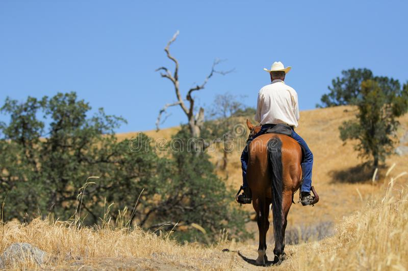 Horse and cowboy on a mountain trail. A tall handsome cowboy is riding his horse up a mountain trail with room for text stock images