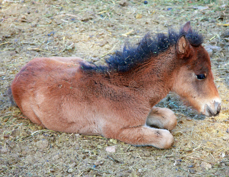Download Horse cub stock photo. Image of grassland, kind, cute - 28406434