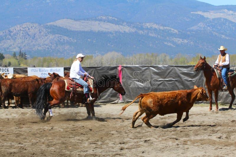 Horse Cutting Show. MERRITT, B.C. CANADA - MAY 5: Cowgirl during the cutting horse event at The Merritt Cutting Horse Show May 5, 2012 in Merritt British stock images