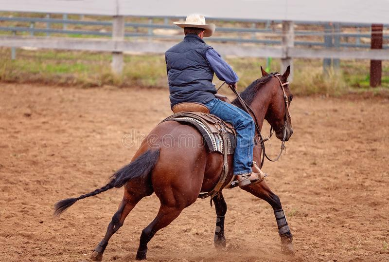 Horse Cutting Training In The Rain royalty free stock image