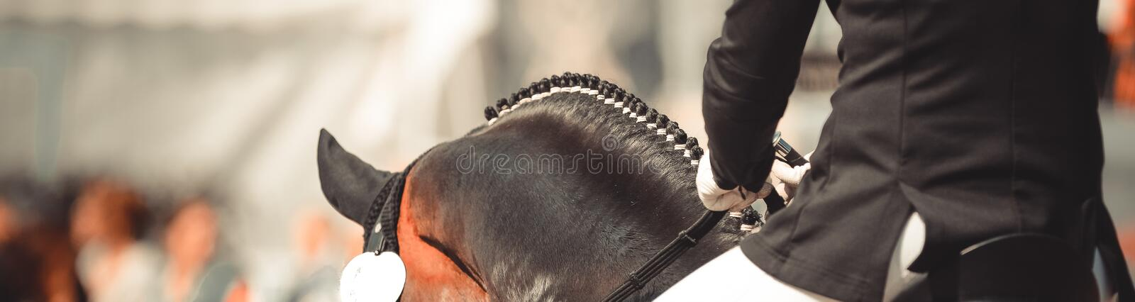 Horse dalbies photographed from behind in dressage over the neck. Horse dalbies photographed from behind in the dressage over the neck, with plaited braids royalty free stock photo