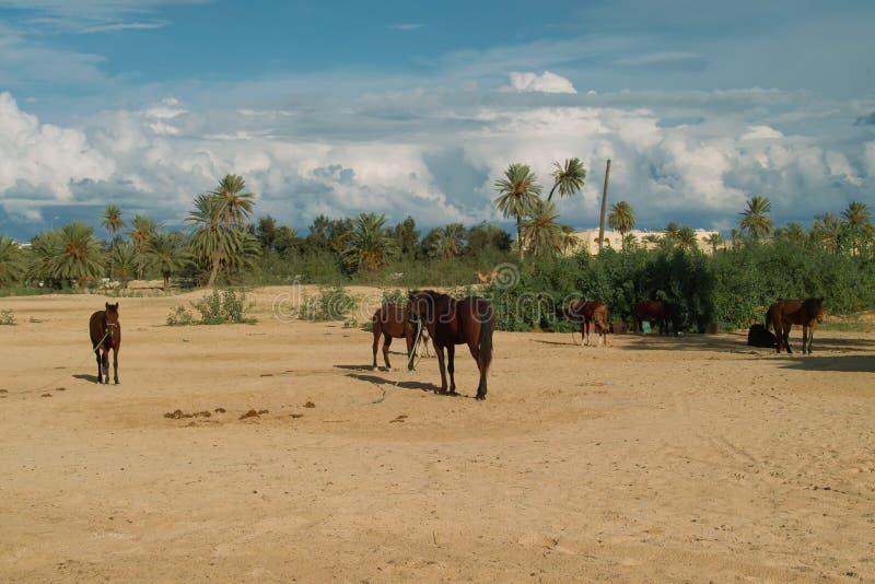 Horse with Djerba stock photo