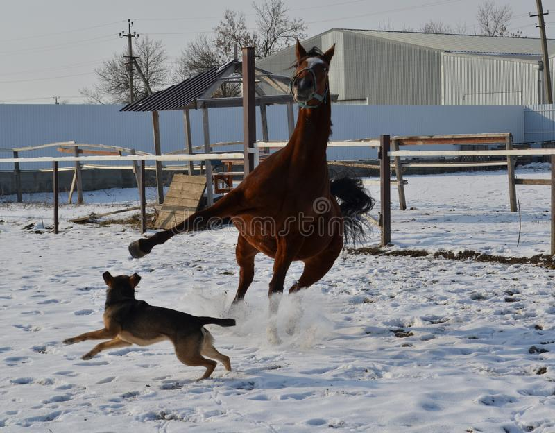 Horse and dog royalty free stock photos
