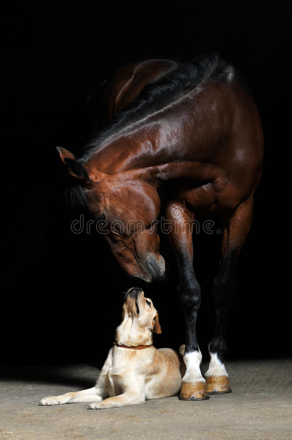 Horse and dog on the black background. Brown horse and dog on the black background