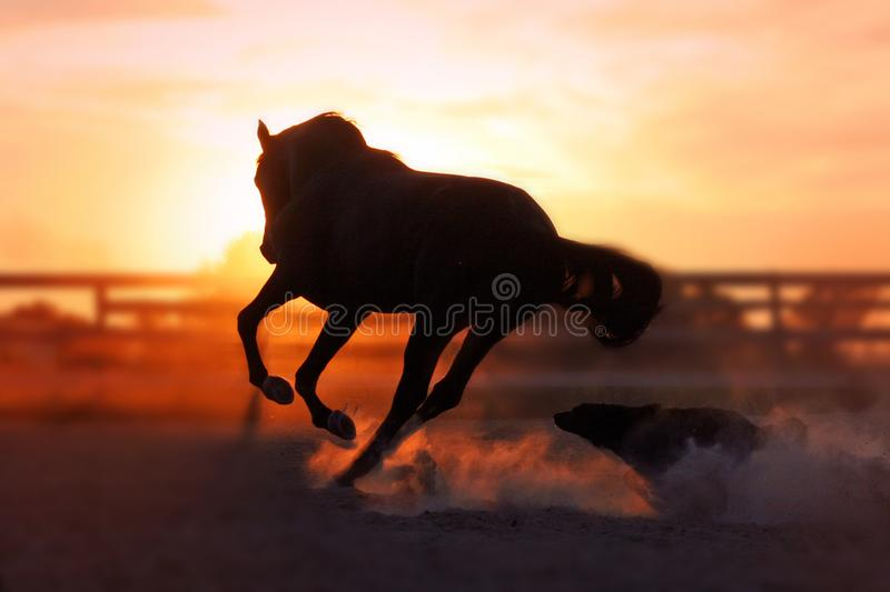 Horse and dog on sunset background royalty free stock photography