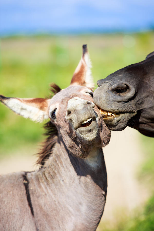 Download Horse and Donkey stock image. Image of summer, horse - 32765159
