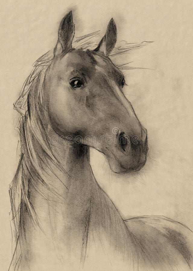 Horse drawing. Freehand horse head sepia toned pencil drawing