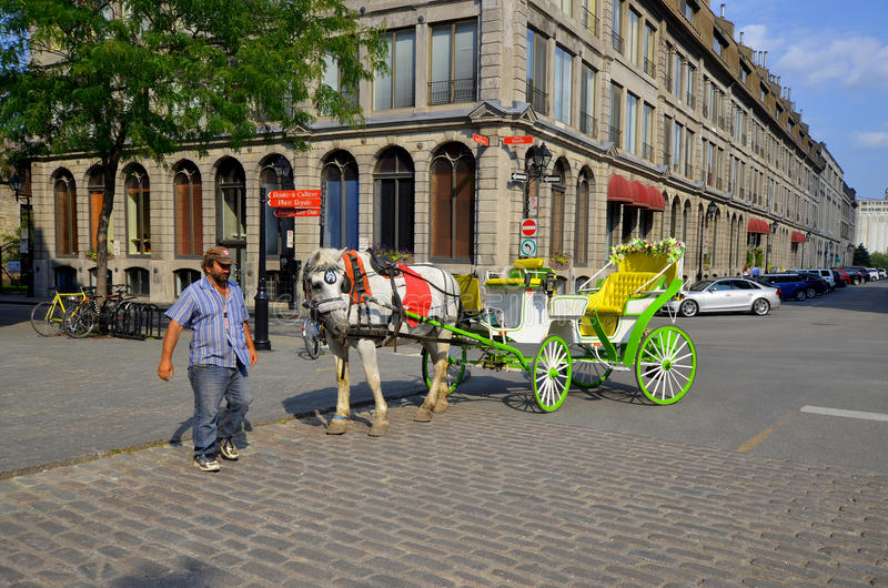 Horse drawn buggy stock images