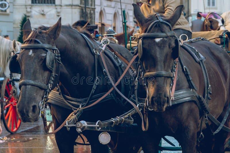Horse-drawn carriage or Fiaker, popular tourist attraction, on Michaelerplatz in Vienna, Austria royalty free stock photos