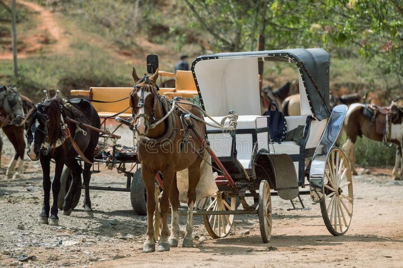 Horse-drawn carriage. A horse with a carriage standing in the countryside. stock images