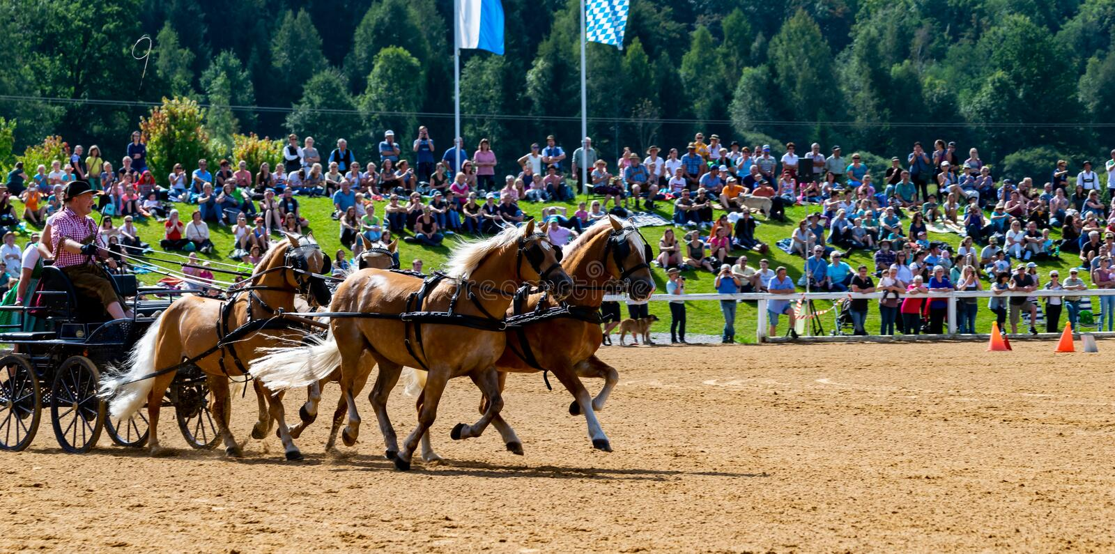 Horse-drawn carriage races at a stud show in Schwaiganger, Bavaria-September 9, 2018 royalty free stock photo