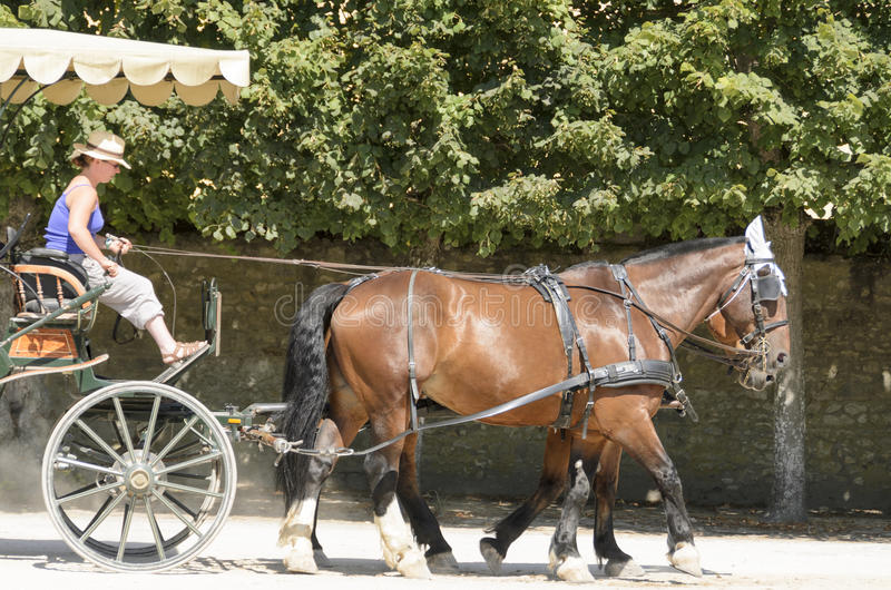 Horse drawn stock images
