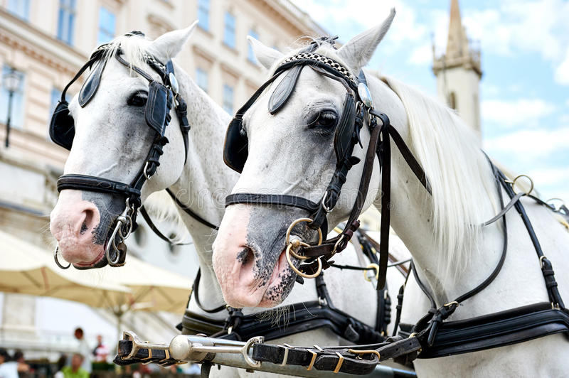 Horse-drawn carriage in Vienna, Austria stock image