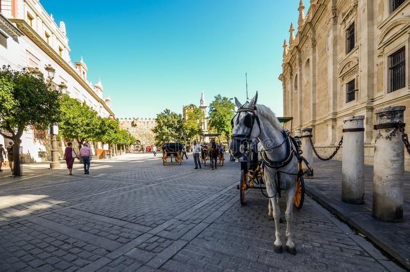 Horse-drawn carriages for hire on Plaza del Triunfo, Seville, Andalusia, Spain royalty free stock photo