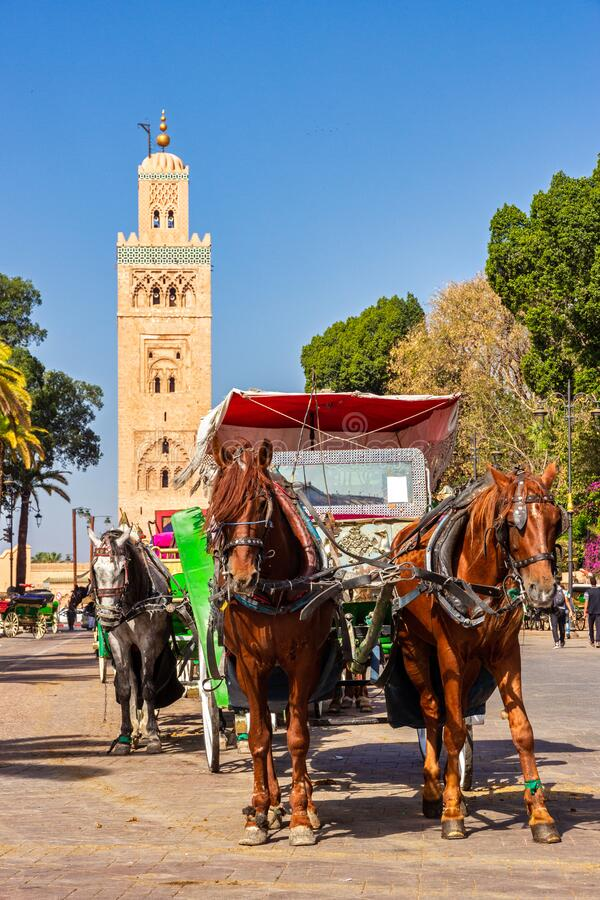 Horse-drawn carriages waiting for tourists at the Djemaa-el-Fna square near the Koutoubia mosque stock images