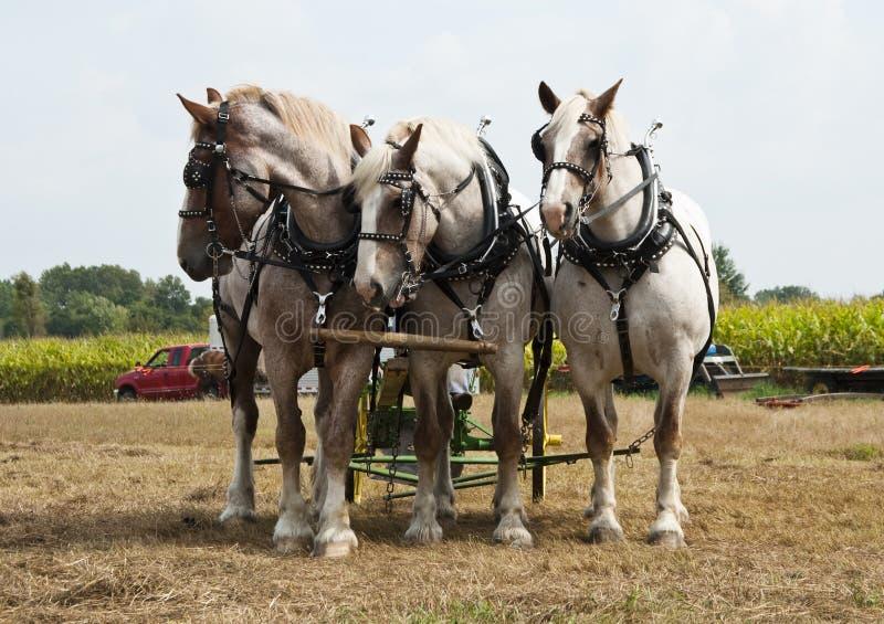Horse-drawn de landbouwdemonstraties royalty-vrije stock afbeelding