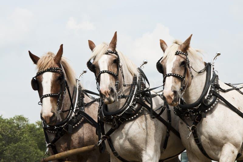 Horse-drawn de landbouwdemonstraties royalty-vrije stock foto's