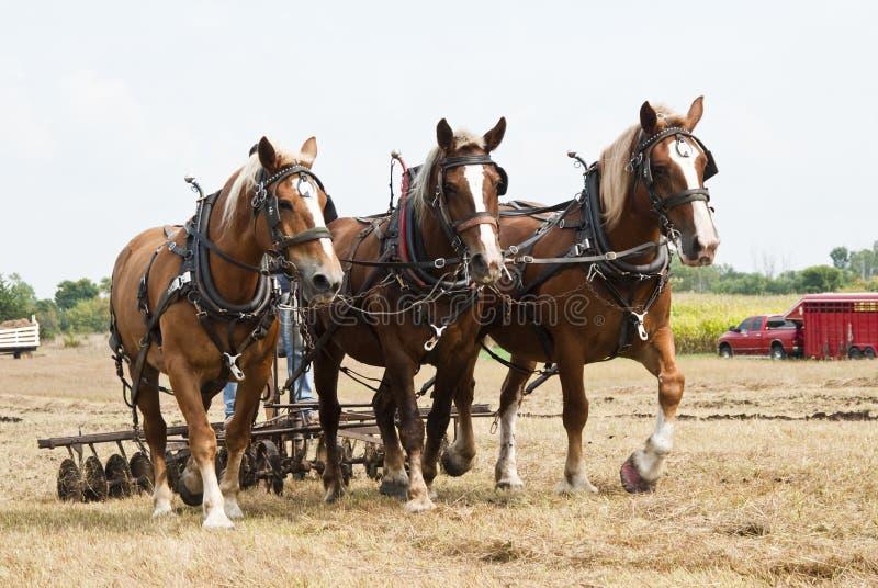 Horse-drawn de landbouwdemonstraties stock afbeeldingen