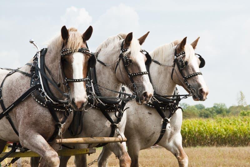 Horse-drawn de landbouwdemonstraties stock foto