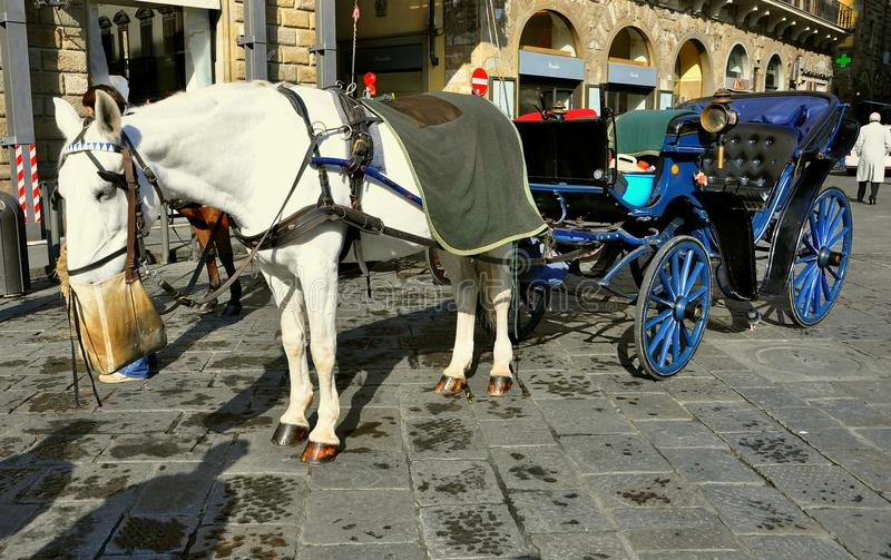 Horse drawn taxi in Florence city , Italy. Horse drawn carriage used as a touristic taxi on the streets of Florence, Italy. piazza in the city center stock image