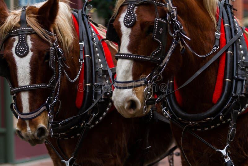 Horse-drawn wagon ride stock photos