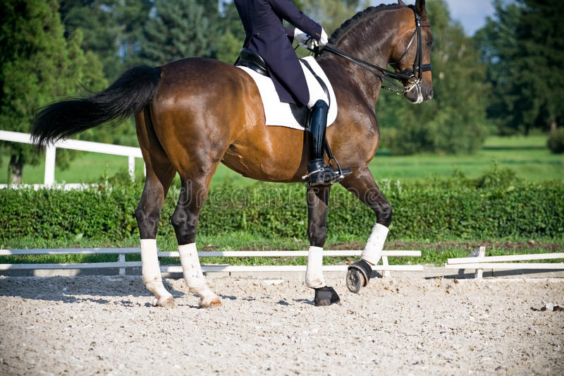 Horse dressage. Competition in summer outdoors royalty free stock image