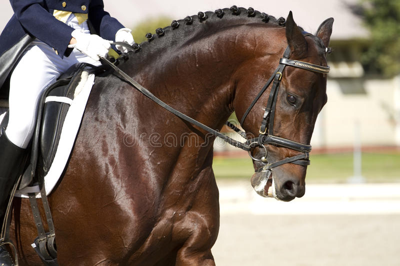 Horse dressage outdoors. And rider royalty free stock image