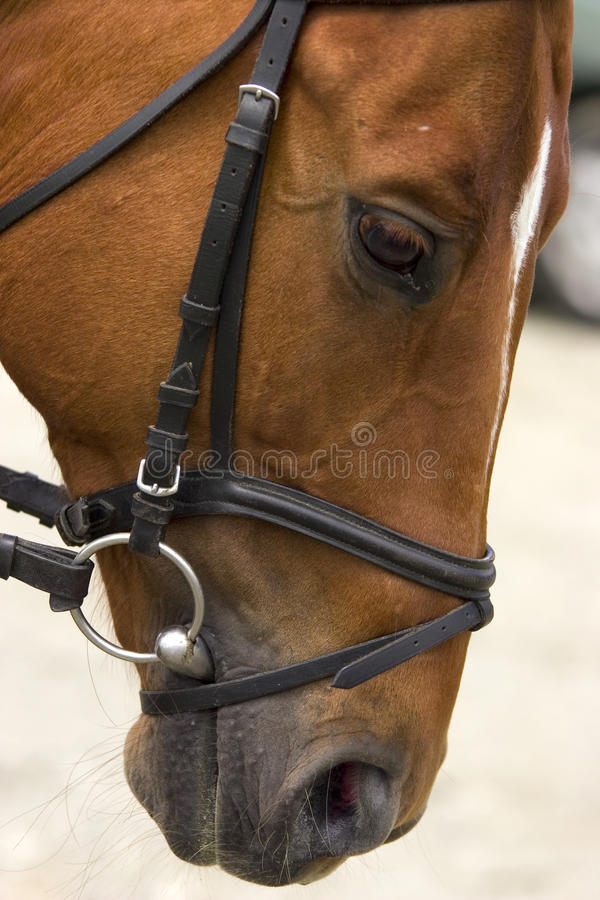 Horse dressage show. Horse in motion royalty free stock photography