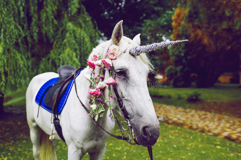 Horse dressed as a unicorn with the horn. Ideas for photoshoot. Wedding. Party. Outdoor. White horse dressed as a unicorn with the horn. Ideas for photoshoot royalty free stock photography