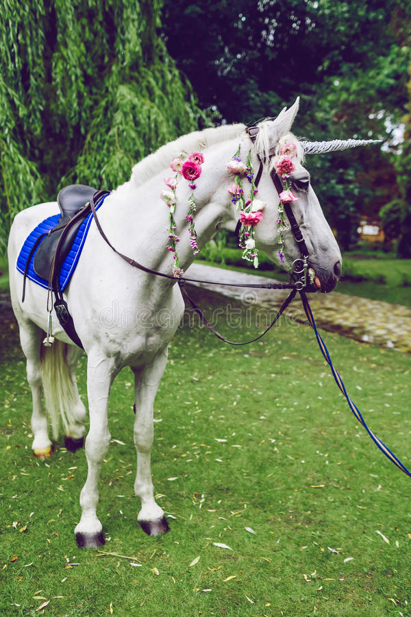 Horse dressed as a unicorn with the horn. Ideas for photoshoot. Wedding. Party. Outdoor. White horse dressed as a unicorn with the horn. Ideas for photoshoot royalty free stock photo