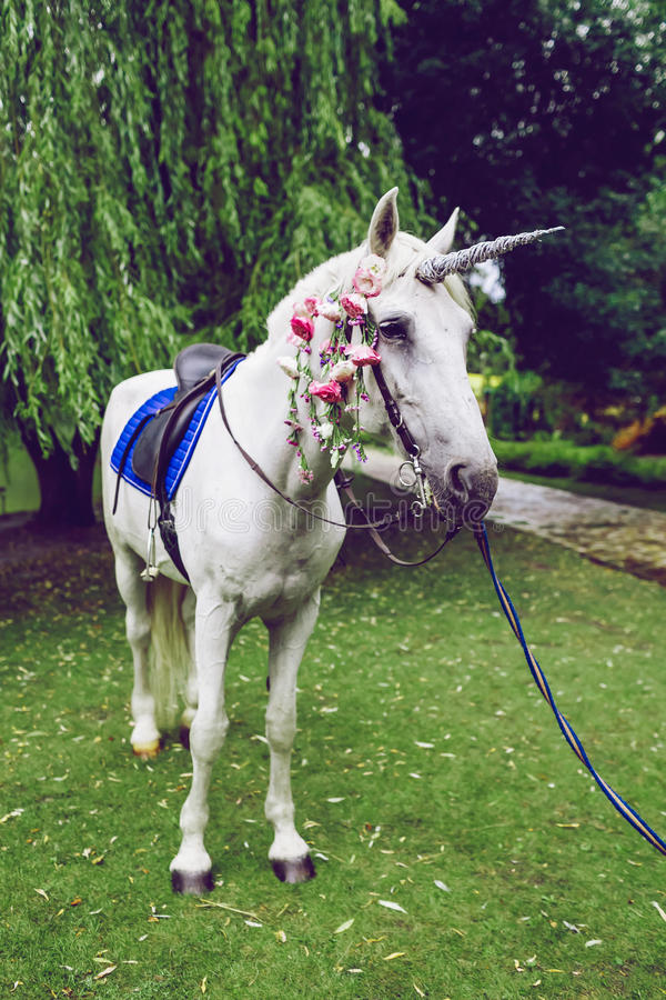 Horse dressed as a unicorn with the horn. Ideas for photoshoot. Wedding. Party. Outdoor. White horse dressed as a unicorn with the horn. Ideas for photoshoot stock photos