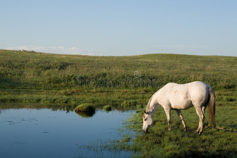 Download Horse drinking from creek stock image. Image of rural - 6711437