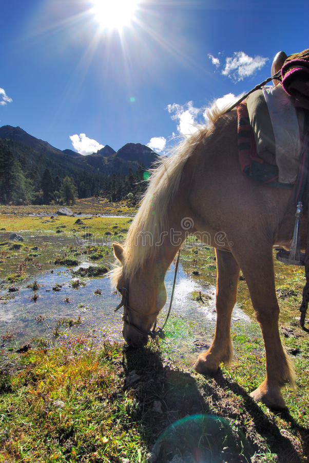 Download Horse Drinking In High Altitude Stock Photo - Image: 14068304