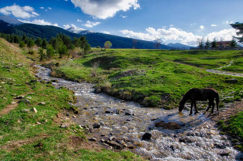 Horse drinking water royalty free stock photography