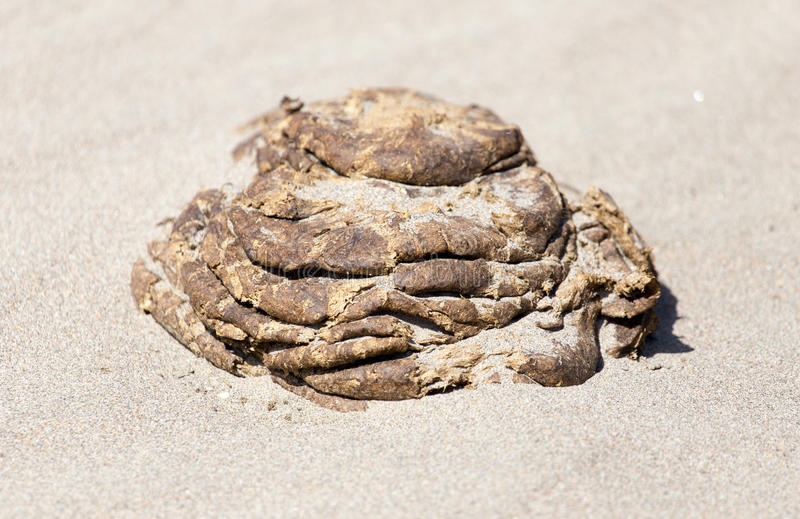Horse droppings in the sand. A photo stock image