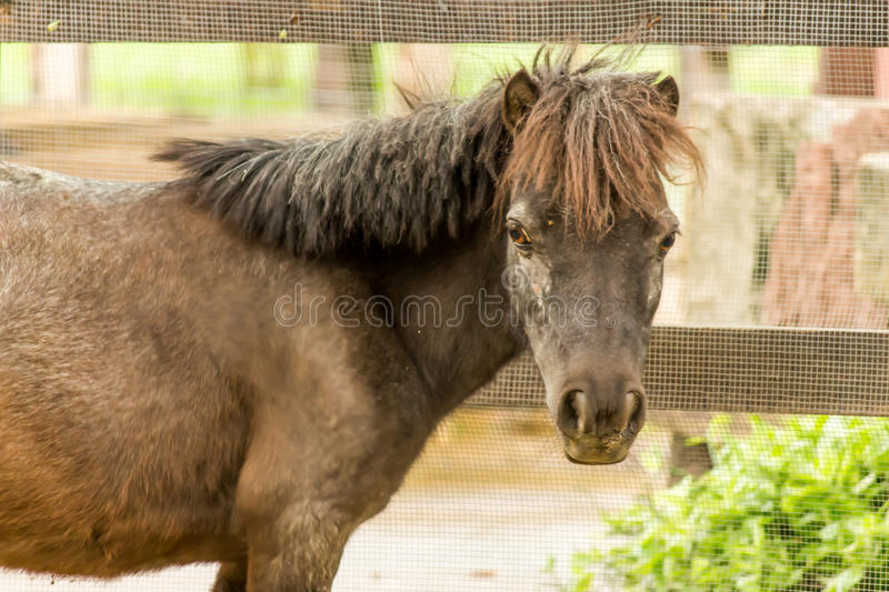 Horse of Du-sit zoo royalty free stock image