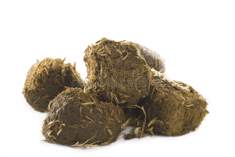 Horse Dung. Heap of horse dung with hay straws on white background stock photography
