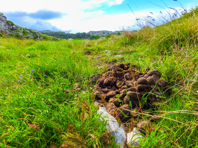 Horse dung or manure. On mountain Biokovo in Croatia royalty free stock images