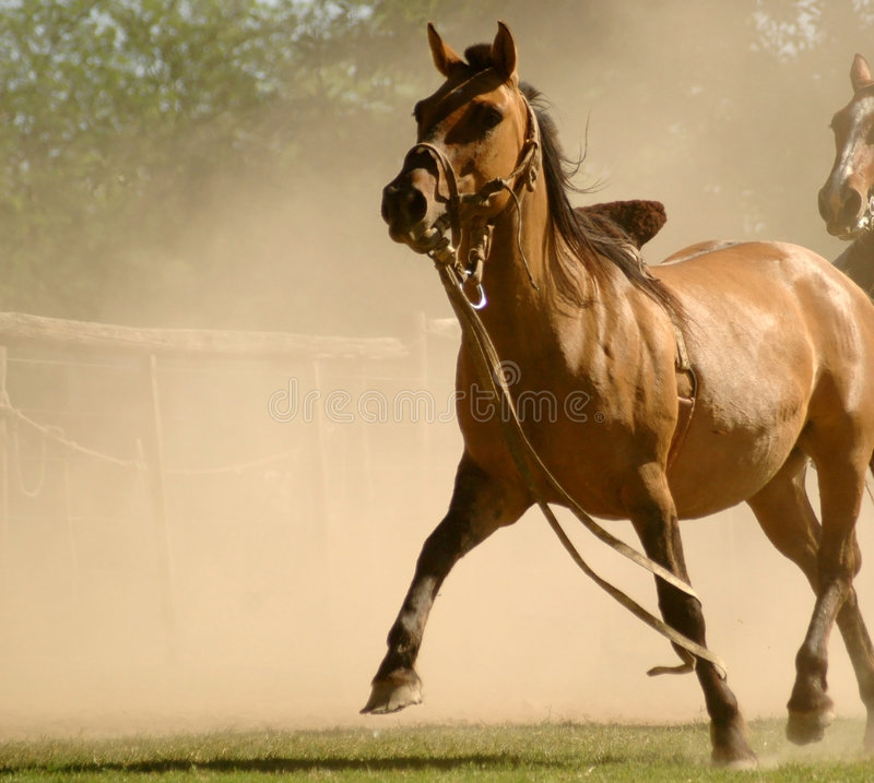 Horse in dust royalty free stock photo