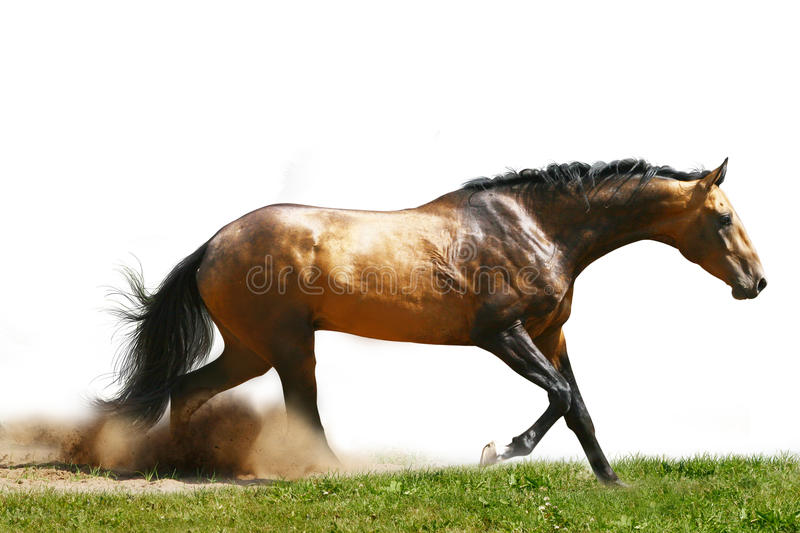 Horse In Dust Isolated Stock Photo