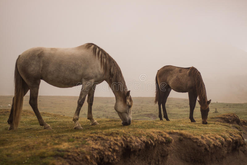 The horse royalty free stock photography
