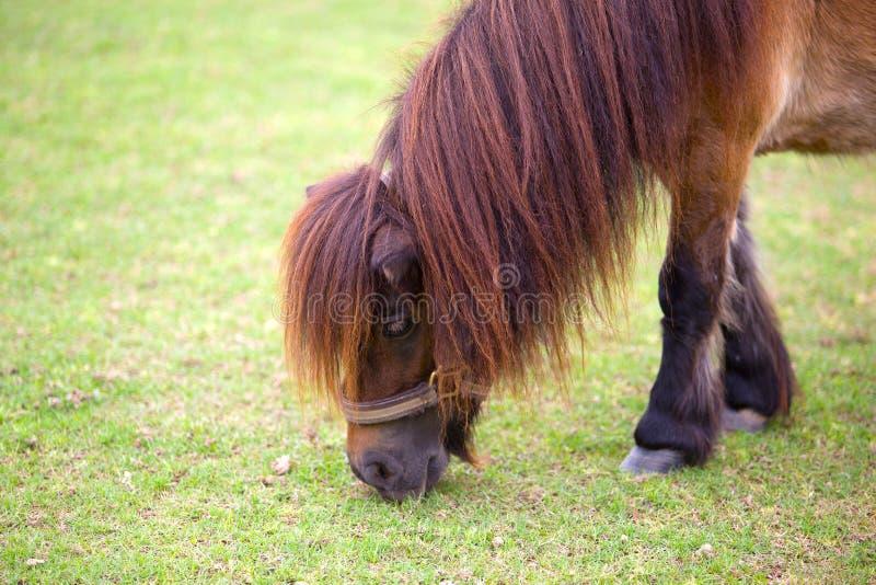 Horse eating food greensward royalty free stock photo
