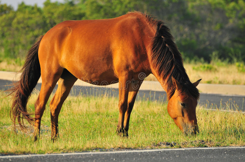 Horse eating grass stock photo