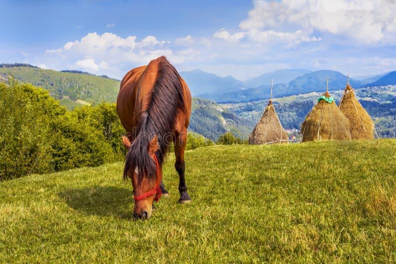 Horse eating grass royalty free stock photos