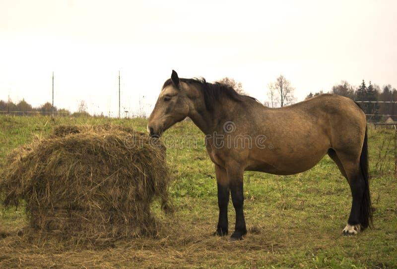 Horse eating stock image