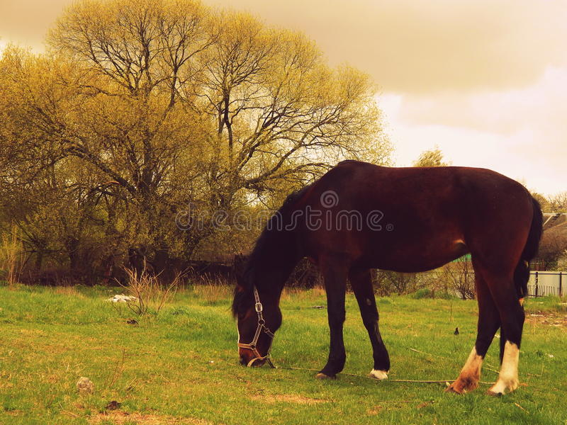 Horse eats grass royalty free stock images